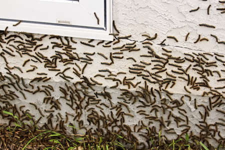 Caterpillars climbing on a stucco house during a bad cycle Stock Photo