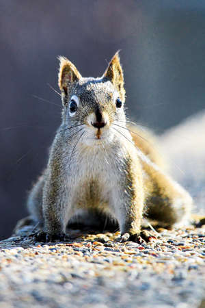 A portrait of a squirrel on a stone wall Stock Photo