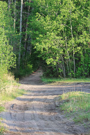 A dirt trail splitting into various directions