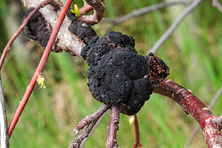 Closeup of a fungus growth on a tree branch