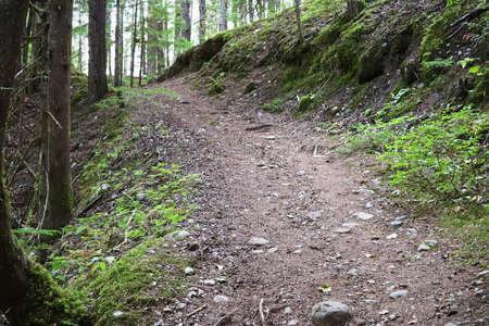A hiking trail through a cedar forest