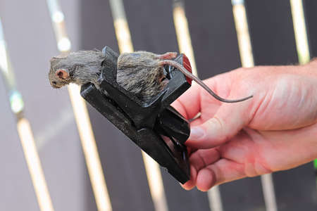 A hand holding a trap with a dead mouse in it