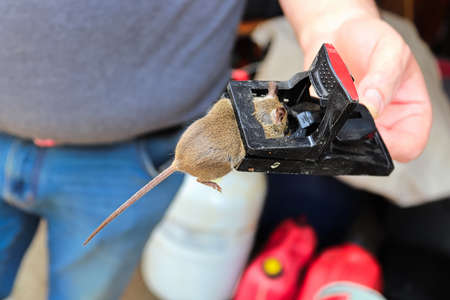 A hand holding a trap with a dead mouse in it Banco de Imagens - 133836224