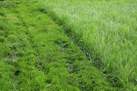 A strip of mowed lawn against tall grass Stock Photo
