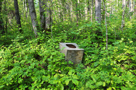 A toilet seat in the middle of the forest