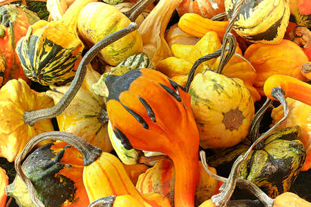 A pile of autumn gourds in various shapes and sizes Banco de Imagens - 133836586