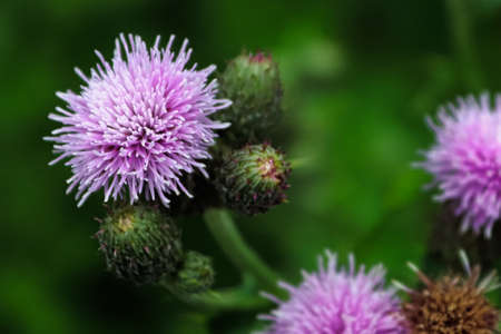Macro view of a thistle flower head against a blurred background.
