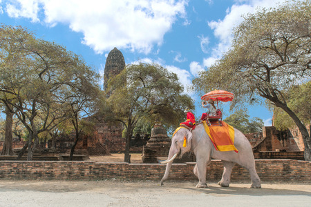 traveller: Tourist on elephant sightseeing in Ayutthaya Historical Park, Ayutthaya, Thailand Stock Photo