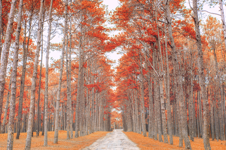netherlands: Sand lane with trees on a sunny day in autumn