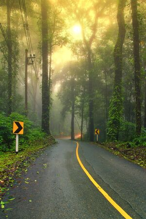 wikipedia: Forest road in early foggy morning with visible sun rays