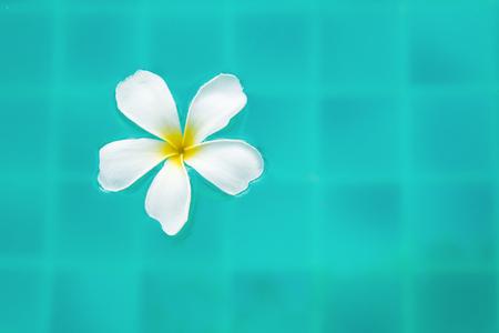 aqua flowers: Single Peaceful Plumeria Flower Floating on Clear Rippling Water