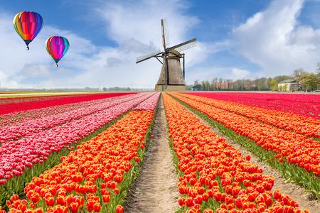 Landschaft der Niederlande Strauß Tulpen mit Heißluftballon. Bunte Tulpen. Tulpen im Frühjahr und Windmühlen in den Niederlanden.