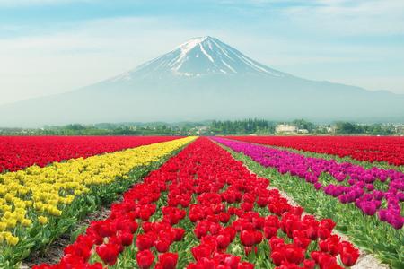 Landschap van Japan tulpen met Mt.Fuji. Kleurrijke tulpen. Tulpen in het voorjaar en Mt.Fuji in Japan. Stockfoto