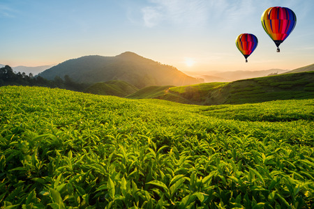 Malaysia tea plantation at Cameron highlands with hot air ballon in morning in Malaysia 스톡 콘텐츠