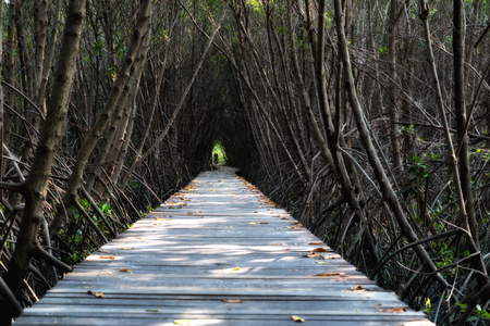 Tree tunnel, Wooden Bridge In Mangrove Forest at Laem Phak Bia, Phetchaburi, Thailand Stock Photo