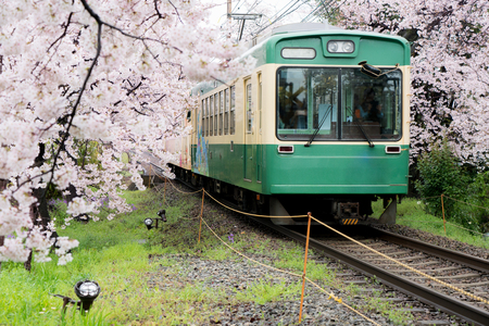 View of Kyoto local train traveling on rail tracks with flourishing cherry blossoms along the railway in Kyoto, Japan. Banco de Imagens - 75675132