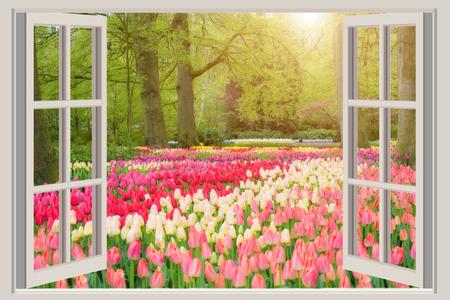 Het venster met de mooie tuin van de lentetulpen bloeit in Nederland.