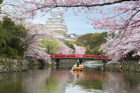 Himeji Castle with beautiful cherry blossom in spring season at Hyogo near Osaka, Japan. Himeji Castle is famous cherry blossom viewpoint in Osaka, Japan. Banco de Imagens