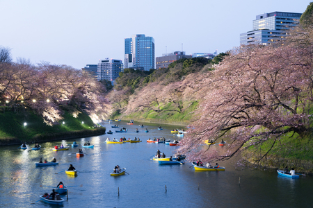 Night view of massive cherry blossoming with Tokyo city as background. Photoed at Chidorigafuchi, Tokyo, Japan.
