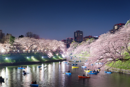 Night view of massive cherry blossoming with Tokyo city as background. Photoed at Chidorigafuchi, Tokyo, Japan.  Stock Photo