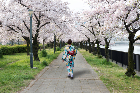 Asian woman wearing traditional japanese kimono in cherry blossom garden in Osaka, Japan. Spring season in Japan.