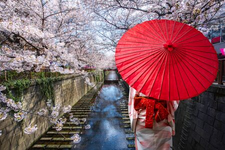 Asian young woman traveller wearing japanese traditional kimono with red umbrella sightseeing at famous destination cherry blossom lined Meguro Canal in Tokyo, Japan. Springtime in April in Tokyo, Japan.