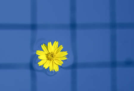 yellow flower floating on the water