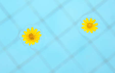 flower floating on swimming pool Stock Photo