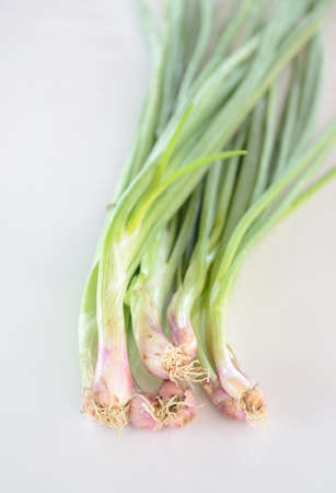 Spring Onion on white background