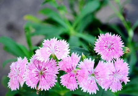 flower blooming in garden Stock Photo