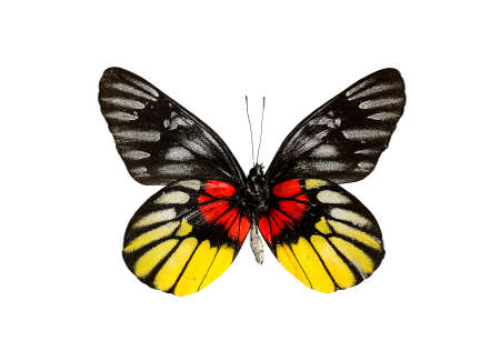 butterfly isolate on white Stock Photo