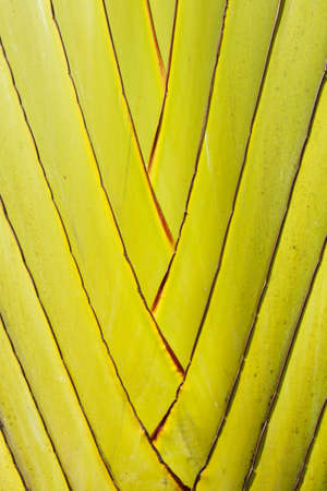 zigzag palm tree trunk, texture of green palm tree trunk. photo