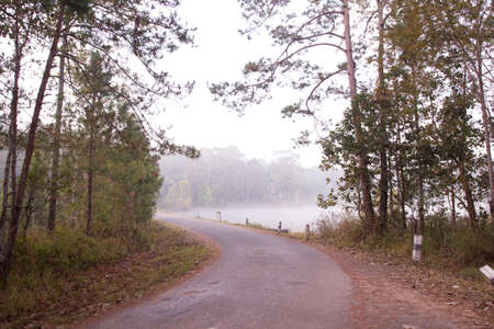 misty morning. red rough road to the misty lake in morning. photo