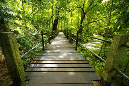 evergreen forest: evergreen forest, bridge walk to tropical humid green forest Stock Photo