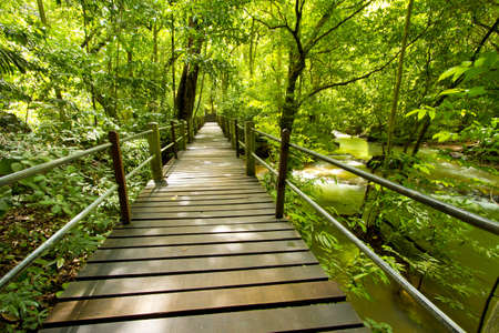 green forest, bridge walk to tropical humid green forest photo