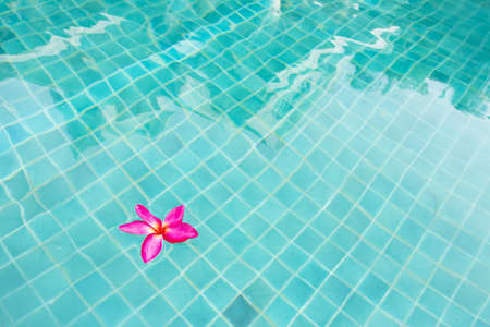 flower floating, pink flower floating in blue swimming pool Stock Photo - 13756085