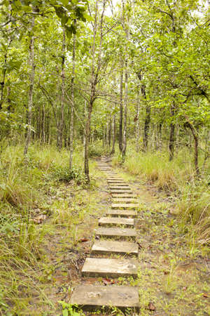 forest walk way, walking trail in Thailand forest photo