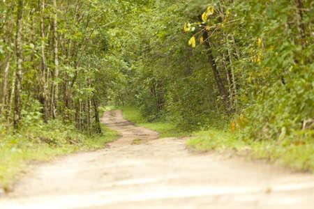walking trail: foresta dissipare, sentiero escursionistico in Thailandia foresta