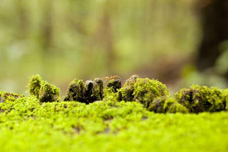 ant on mountain, transparent orange ant walking on green mos carpet Stock Photo