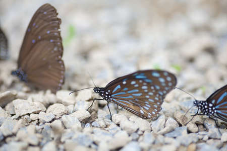 butterflies, two brown butterflies stick on the rock in forest light photo