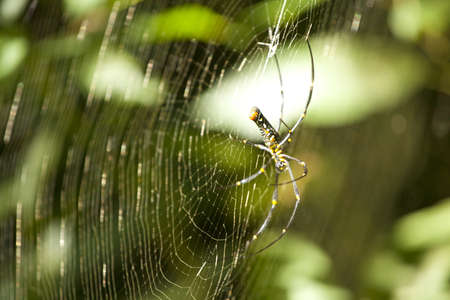 spider web, side surface of spider s web in forest photo