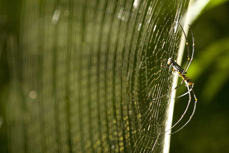 spider network, side surface of spider s web in forest photo