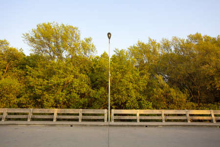 concrete road on mangrove, one electric light pole on concrete bridge road and mangrove trees background photo