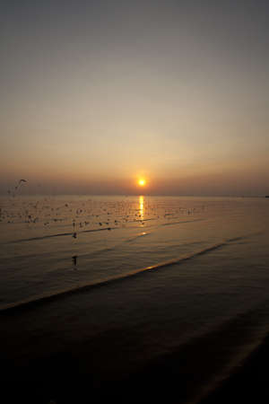 migrate: horizon, white migrate brown-headed gulls with the sea shore sunset Stock Photo