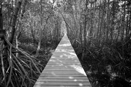 bridge forest:  bridge forest, long wooden bridge to mangrove forest in black and white Stock Photo
