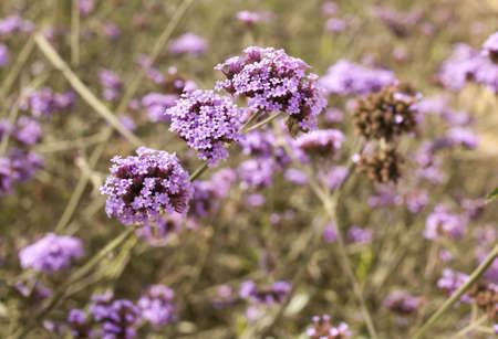 small purple flower: purple flower, close up to ball shape small purple flower
