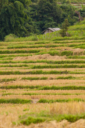 rice field, step rice field on the mountain agriculture in Chiengmai Thailand photo