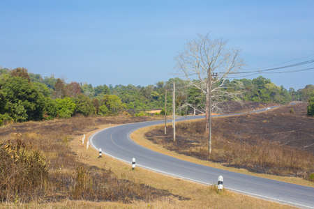 curve road, clear sky and empty curve road in the forest with wide field