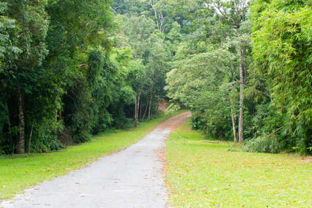 dampness: road to wood,concrete road cut to dampness green tropical forest