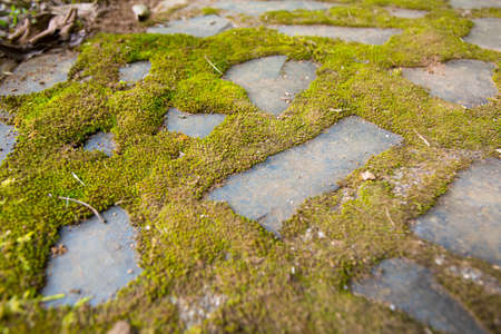 dampness: moss on the floor, green moss grows on the dampness brick floor in the forest, Thailand